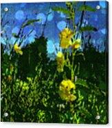 Wildflower Field Acrylic Print