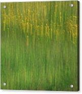 Wildflower Fields Abstract Acrylic Print