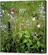 Wildflower Garden Acrylic Print