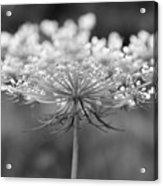 Wildflower II Acrylic Print