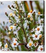 Wildflower,  Acrylic Print