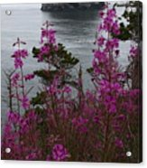Wildflower Lookout Acrylic Print