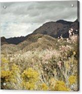Wildflower Mountain Acrylic Print by Andrea Hazel Ihlefeld