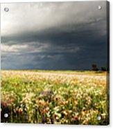 Wildflower Panorama 2008 Acrylic Print