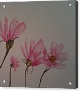 Wildflower Pink Acrylic Print by Ginny Youngblood