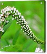 Wildflower Slide Acrylic Print