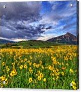 Wildflower Storm Acrylic Print