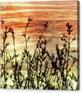 Wildflower Sunrise Acrylic Print