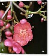 Wildflower Surprise Acrylic Print