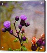 Wildflower Watercolour Acrylic Print