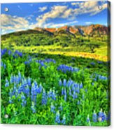 Wildflower Wonder Acrylic Print