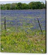Wildflowers - Blue Horizon Acrylic Print