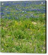 Wildflowers - Blue Horizon Three Acrylic Print