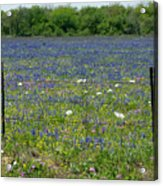 Wildflowers - Blue Horizon Too Acrylic Print