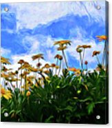 Wildflowers 11318 Acrylic Print