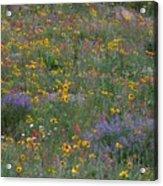 Wildflowers Abundance Acrylic Print