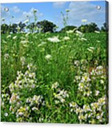 Wildflowers Along Country Road In Mchenry County Acrylic Print
