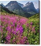 Wildflowers And A Glacier Acrylic Print