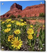 Wildflowers And Butte Acrylic Print