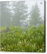 Wildflowers And Fog Acrylic Print