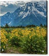 Wildflowers And Mount Moran Acrylic Print