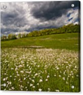 Wildflowers And Storm Clouds Acrylic Print