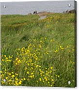 Wildflowers At Cape Spear Acrylic Print