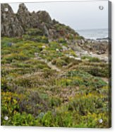 Wildflowers At China Rock - Pebble Beach - California Acrylic Print