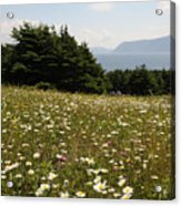 Wildflowers at Lobster Cove Acrylic Print