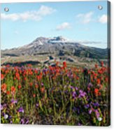 Wildflowers At Mount St Helens Acrylic Print