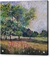 Wildflowers Best Stay Wild Acrylic Print