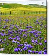 Wildflowers Carrizo Plain National Monument Acrylic Print