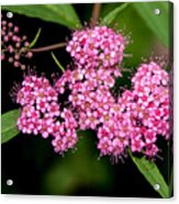 Wildflowers Come In Many Sizes Acrylic Print