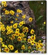 Wildflowers Honoring Mary Jabens Acrylic Print