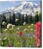 Wildflowers In Mount Rainier National Acrylic Print