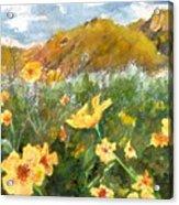 Wildflowers In The Desert Acrylic Print