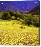 Wildflowers In The San Emigdio Mountains Acrylic Print