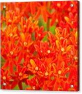 Wildflowers In The Smokies Acrylic Print
