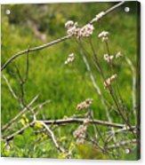Wildflowers Marblehead Massachusetts Acrylic Print