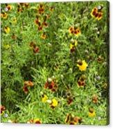 Wildflowers Nine Acrylic Print