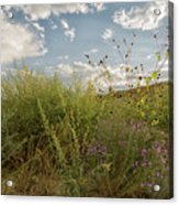 Wildflowers Of Chaco Acrylic Print