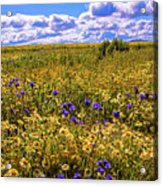 Wildflowers Of The Carrizo Plain Superbloom 2017 Acrylic Print