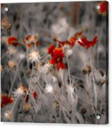 Wildflowers Of The Dunes Acrylic Print by DigiArt Diaries by Vicky B Fuller