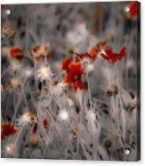 Wildflowers Of The Dunes Acrylic Print