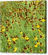 Wildflowers One Acrylic Print