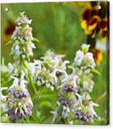 Wildflowers Three Acrylic Print