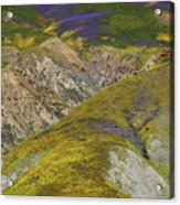 Wildflowers Up The Hills Of Temblor Range At Carrizo Plain National Monument Acrylic Print