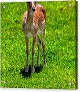 Wildlife 2 Acrylic Print
