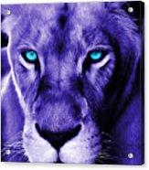 Wildlife Lion 12 Acrylic Print