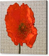 Will The Poppy In The Back Please Stand Up Acrylic Print